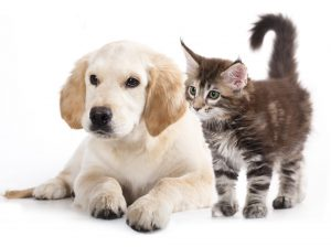 """How to navigate divorce and separation of """"property,"""" of which my beloved pets are part"""